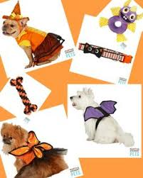 Martha Stewart Dog Halloween Costumes Martha Stewart Pets Glow Dark Skeleton Costume Costumes