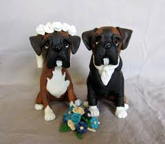 boxer dog gum problems popular tips and tricks about boxer dog grooming boxer dog info