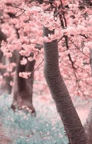 the 25 best cherry blossom wallpaper ideas on pinterest beauty