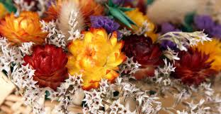 preserving flowers drying pressing and preserving flowers my garden