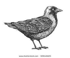 free hand drawn bird in nest vector download free vector art