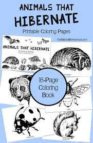 animals in winter hibernation adaptation and migration printable