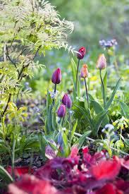 49 best spring flowers images on pinterest spring flowers