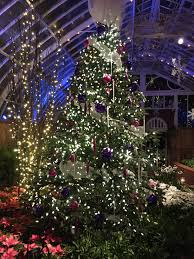 event update phipps conservatory u0027s winter flower show and light