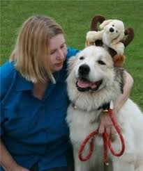 great pyrenees rescue provides wonderful dogs to good homes 40 best texas great pyrenees rescue adopt pyr dogs images on