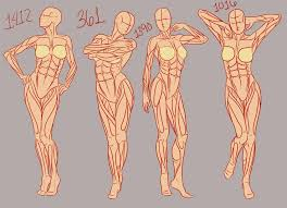 Human Anatomy Reference 576 Best Body Positions Art Reference Images On Pinterest