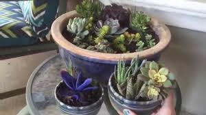 succulent arrangements diy succulent arrangements