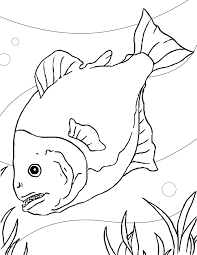 awesome free printable piranhas fish coloring pages kids