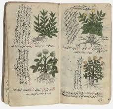 203 best herb remedies images on pinterest remedies healthy