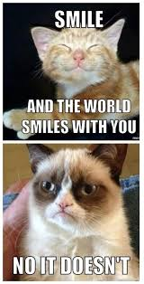 No Meme Grumpy Cat - 167 best grumpy cat images on pinterest funny things ha ha and