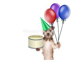 deliver birthday cake and balloons dog delivering birthday cake and balloons stock photo image