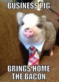 Funny Pig Memes - business pig meme weknowmemes