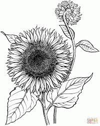 sunflower coloring pages coloring site 12377