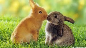 cute rabbit wallpaper wallpapersafari