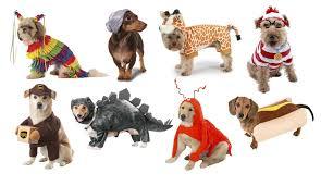 giraffe halloween costumes top 20 best cute dog costumes for halloween brosive com