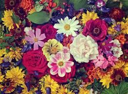 free flowers flower background stock photos royalty free flower background