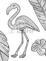 vector hand drawn toucan bird tropical illustration for postcard