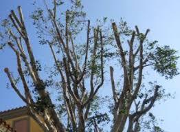 nashville tree trimming pruning service circle tree shrub