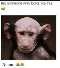 Tag Someone Who Memes - tag someone who looks like this noooo funny meme on
