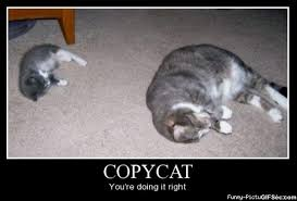 Copy Cat Meme - copycat viral viral videos