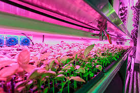 light and plant growth the development of plant growth light led grow lighting