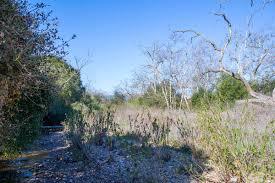 native plants san diego san clemente canyon wikipedia