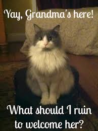 Mad Kitty Meme - cat pee and clutter concern oh grandma s here 盪 the bearded iris