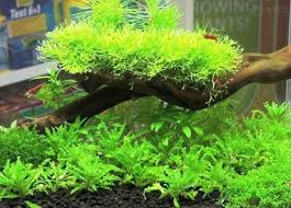 Best Substrate For Aquascaping Best Soil Substrates For Planted Tanks U2013 Reviews U0026 Guide