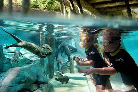 all inclusive resorts all inclusive resorts in florida near