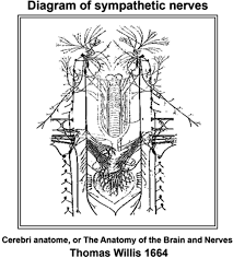 sympathetic nervous system moves toward center stage in