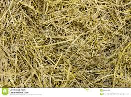 Floor Dry by Dry Grass On Floor Stock Photo Image 53346353