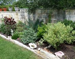 Texas Landscape Plants by Tropical Plants And Central Texas Central Texas Gardening
