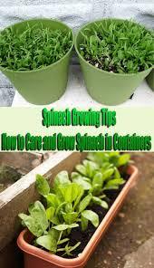 105 best container gardening images on pinterest garden ideas