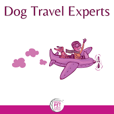 travel experts images Dog travel experts archives radio pet lady network png
