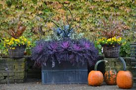 ornamental cabbage and kale dirt simple