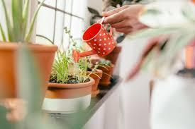 is it worth using epsom salts as a plant fertilizer