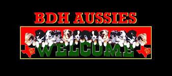 double j australian shepherds bdh aussies australian shepherds