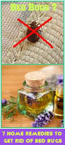 What Kills Bed Bugs Naturally How To Get Rid Of Bed Bugs A Diy Guide
