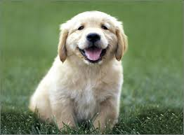 Dog Breeds That Dont Shed Uk by Best Dogs For Toddlers That Don T Shed Toddlers U0026 Preschoolers