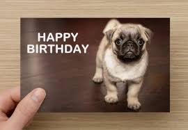 Happy Birthday Pug Meme - list of synonyms and antonyms of the word happy birthday pug pictures