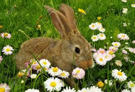 rabbit garden rabbit in the garden with flowers stock photo picture and