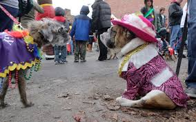 mardi gras dog a pet friendly mardi gras msah metairie small animal