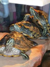 Turtle Planter Learn More About Reptile Care In Tucson Az