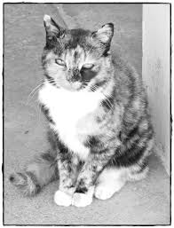 peaceful cat grayscale coloring page thriftyfun