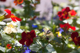 free stock photo 2841 country garden flowers freeimageslive