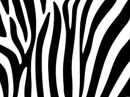 zebra pattern free download zebra background