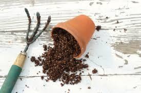 Soil Mix For Container Gardening - soil and soil mixes for you bangkok container garden