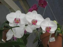 What Is An Orchid Flower - just what is an orchid and then some garden u0026 greenhouse