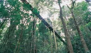 sydney the hills treetops sydney australia u0027s top 10 treetop walks australian geographic