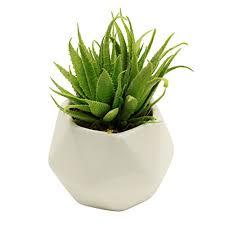 Plant Vase Amazon Com Small Faux Aloe Succulent Plant In Geometric White